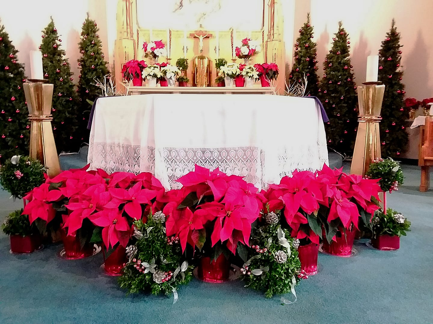 Immaculate Altar Christmas 2019